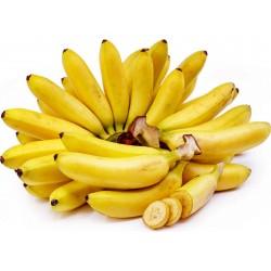 Wilde Bananensamen (Musa balbisiana)  - 6