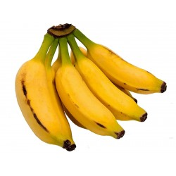 Semi di nano banane Cavendish, Piccolo banana Musa Acuminata  - 2