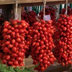 Sementes de tomate PRINCIPE BORGHESE  - 2