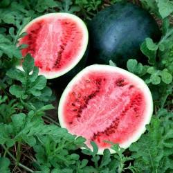 Sugar Baby Watermelon Seeds  - 1