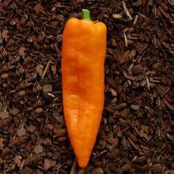Ramiro sweet Giant pepper Seeds  - 2