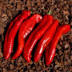 Ramiro sweet Giant pepper Seeds  - 4