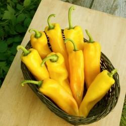 Ramiro sweet Giant pepper Seeds  - 6