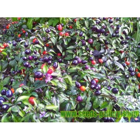 Semillas de Guayaba (Psidium guajava)