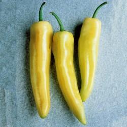 Big Sweet Pepper Seeds Skala  - 1