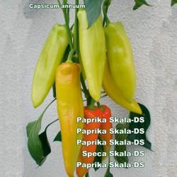 Μεγάλο γλυκό πιπέρι Σπόροι Σκάλα  - 2