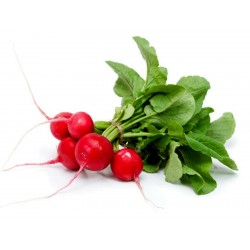 Radish seeds Siberian Prince (Variety from Russia)  - 2