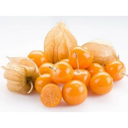 Cape Gooseberry Seeds (Physalis peruviana) 1.5 - 1