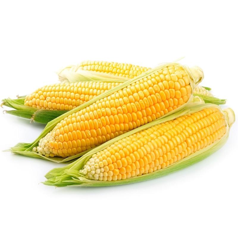 Graines De Maïs Doux Golden Bantam  - 2