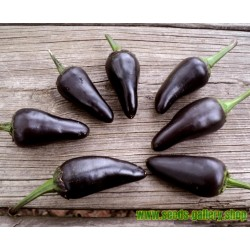 Chili Jalapeno Purple & Brown Seeds