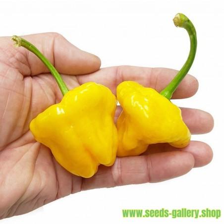 Semillas Pimiento Jamaican Hot Yellow