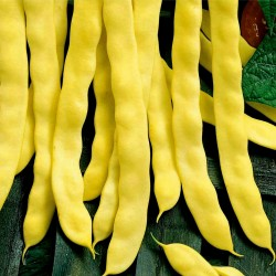 Семена желтые фасоли Goldoral