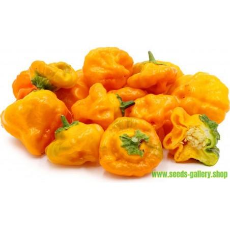 Chili Seme Jamaican Hot Yellow