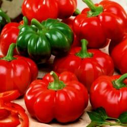 Semillas de pimienta-dulce-roja ROTUND  - 5