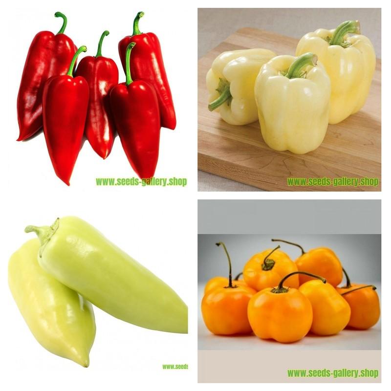 Coleção de sementes de pimentão sérvio 1  - 1