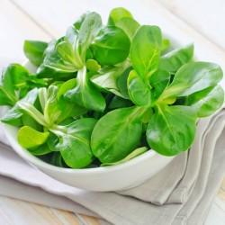 Seme salate Matovilac
