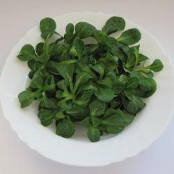 Corn Salad Lettuce Seeds  - 1