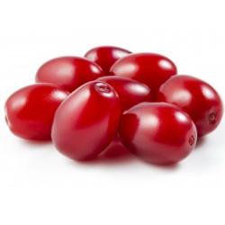 Cornelian Cherry, European Cornel Seeds (Cornus mas)  - 4