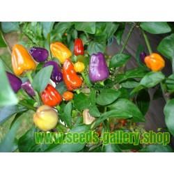 Chili Seme 'Bolivian Rainbow'