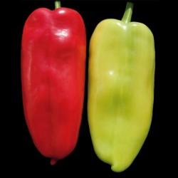 Seme paprike Belo Uvo  - 1