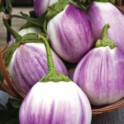 "Graines d'aubergine ""Rosa Bianca"" Seeds Gallery - 2"