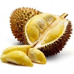 """Graines de durio """"Roi des fruits"""" (Durio zibethinus)  - 5"""
