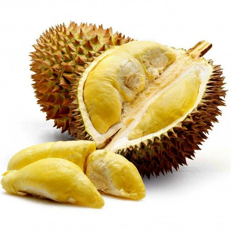 Durian seeds (Durio zibethinus)