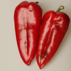 Semillas De Pimiento Rojo Dulce Amphora  - 5