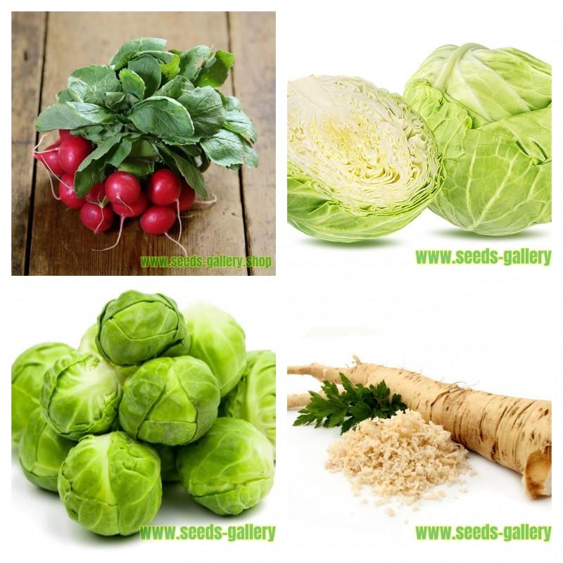 Coleção de sementes de vegetais russos 1  - 1