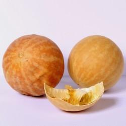 Koloquinte Samen (Citrullus...