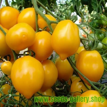 "Sementes De Tomate Amarelo ""Lemon Plum"""
