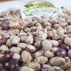 Sırp renkli fasulye tohumları