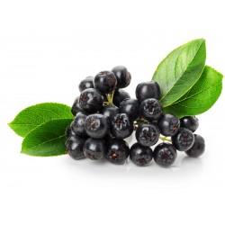 Chokeberry Seeds (Aronia...
