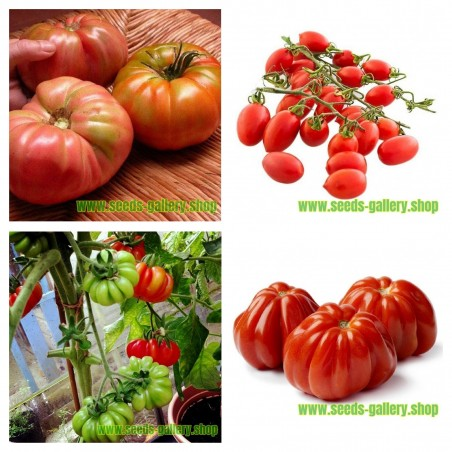 Kolekcija semena Italijanskog paradajza 1