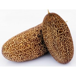 Sikkim gurka frön