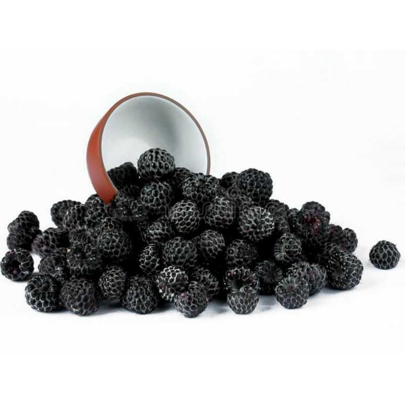 10 Blackcap Raspberry Seeds