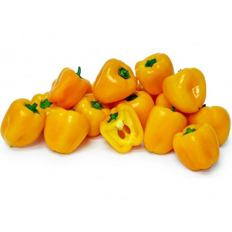 Graines de poivron MINI BELL Jaune