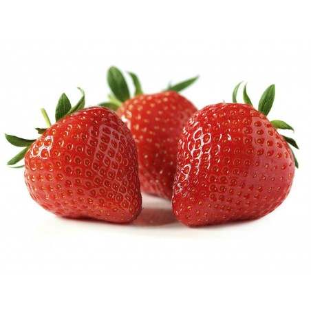 Alba Strawberry Seeds
