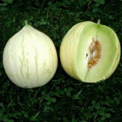 Melonfrön Hógolyó (snöklot)