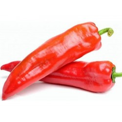 Paprika frön Kalorez