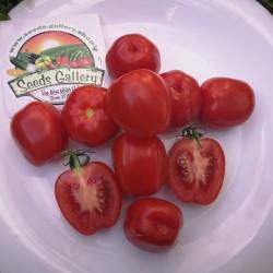 Semillas de tomate y manzana