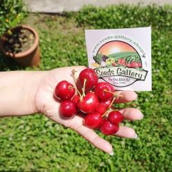 Giant Sweet Cherry Seeds...
